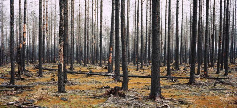 Helene Schmitz- En Annan Natur – Våld, skörhet och ideér om naturen