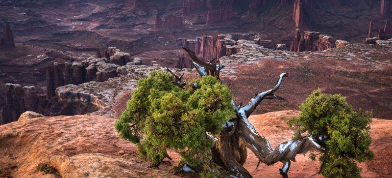 Peter Nilsson- Reise i Canyonland