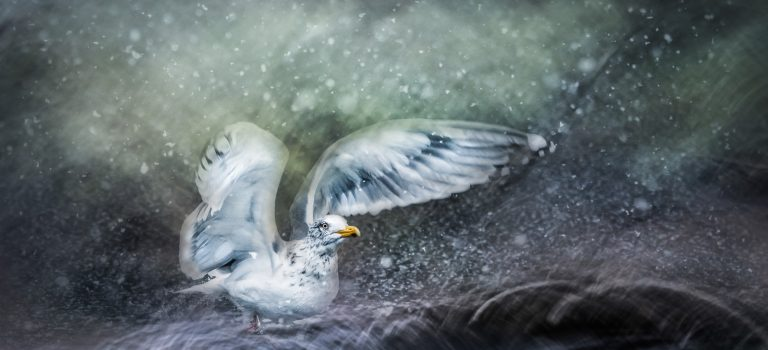 Wenche Dahle- I lyset fra et hav