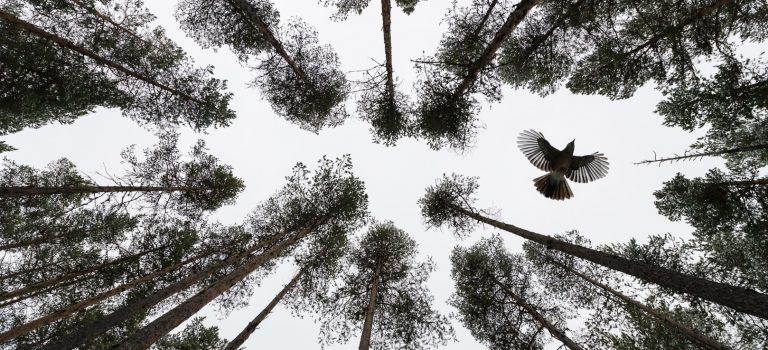 Orsolya og Erlend Haarberg- Laponia – storslagen stillhet