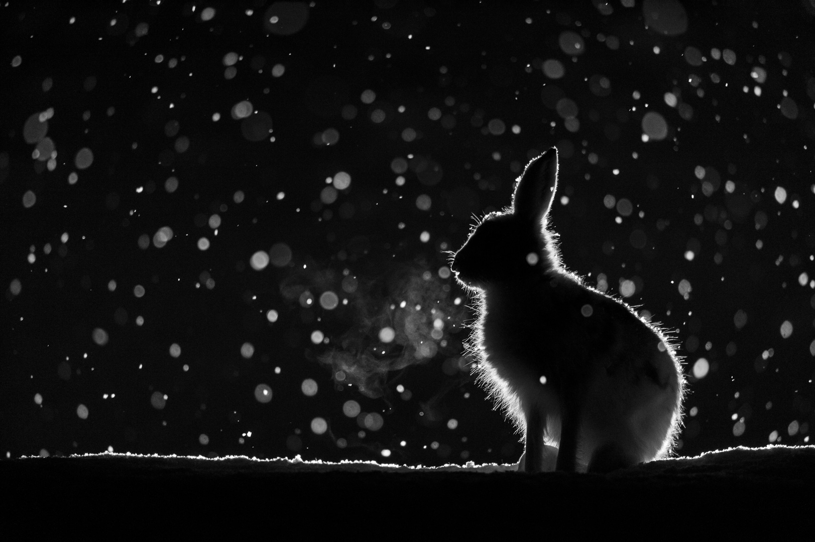 Bare Hare- foto Erlend Haarberg