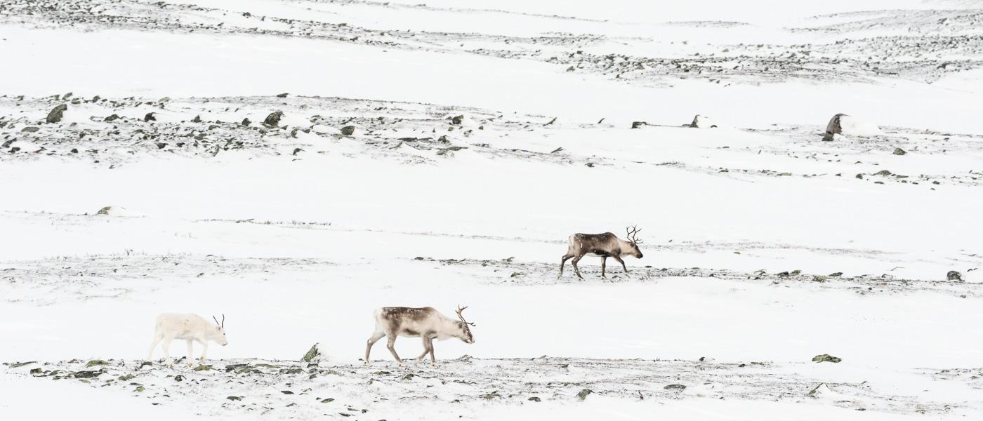 Laponia- Foredrag og utstilling