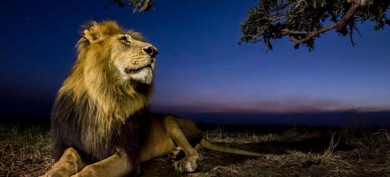 Arnfinn Johansen: Maasai Mara – med og uten vidvinkel