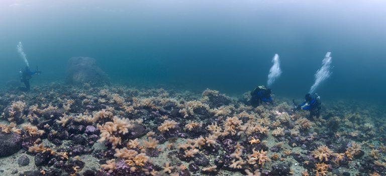 Espen Rekdal – Norways Seasonal Seas