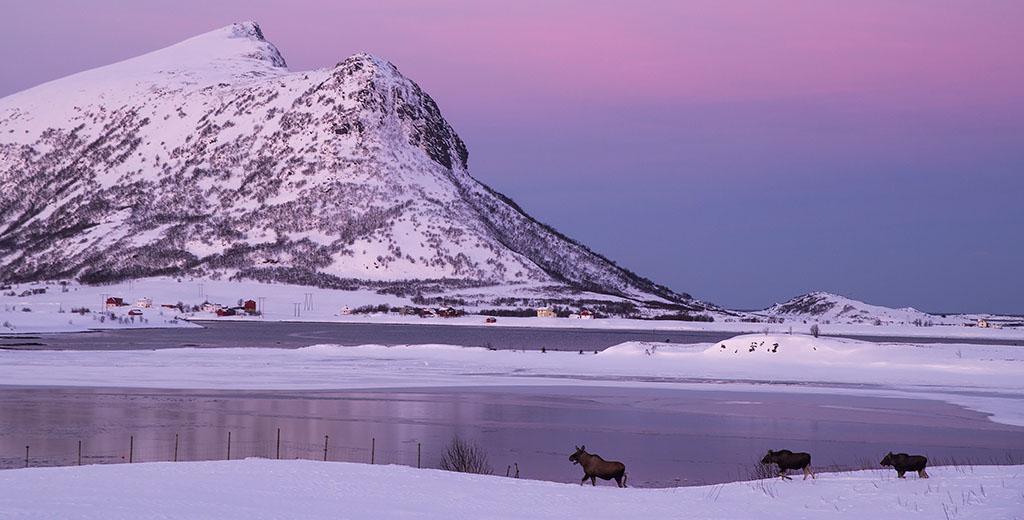 Torbjørn Martinsen – Ett år i Lofoten
