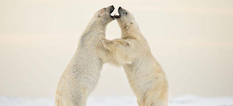 Roy Mangersnes: Svalbard – frosset i tiden