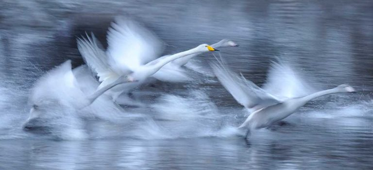 Øystein Søbye: Der elvene møtes