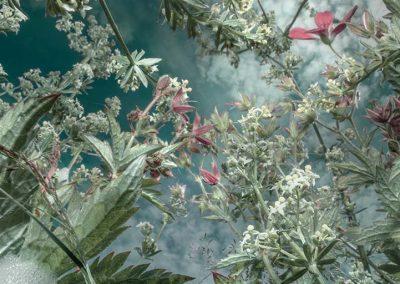 Tine Poppe: En vakker pustepause