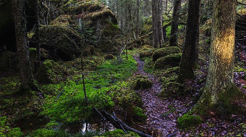 Temautstilling: Østmarka, den bynære nasjonalparken