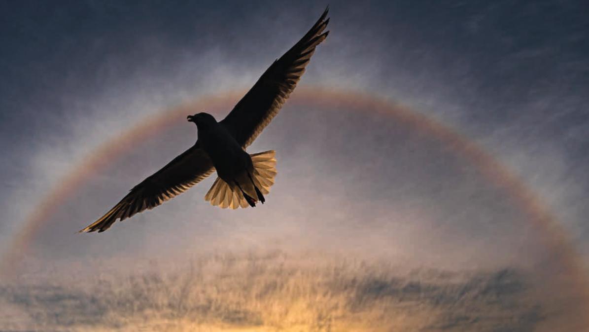 Møt årets nordiske naturfotograf
